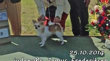She got a award in 100 Chihuahua dogs!すあいちゃん初のお立ち台です♪