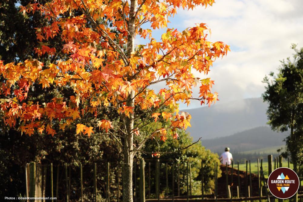 Garden-Route-Trail-Park_02.jpg