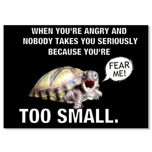 SMALL TURTLE PROBLEMS STICKER