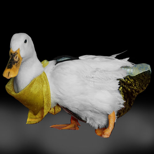 Luxury Duck Diaper Set