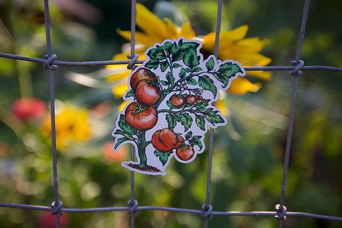 Tomato Plant (M)