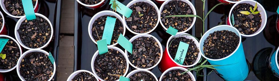 RootsAndRefugeFarm-Seeds.jpg