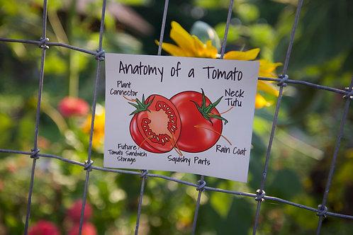 Anatomy of a Tomato (M)