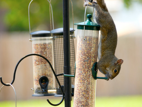 Leadership Lessons from a Squirrel