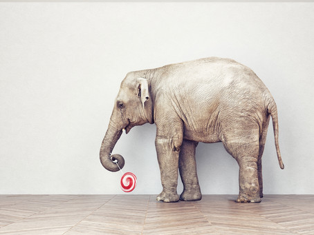 A Tale of The Elephant in the Room & Leadership Development.
