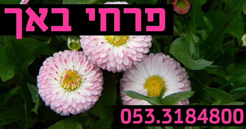 פרחי באך.png