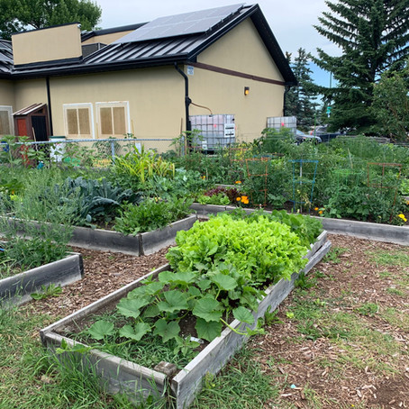 Come Visit the Community Garden at the Community Association Grounds