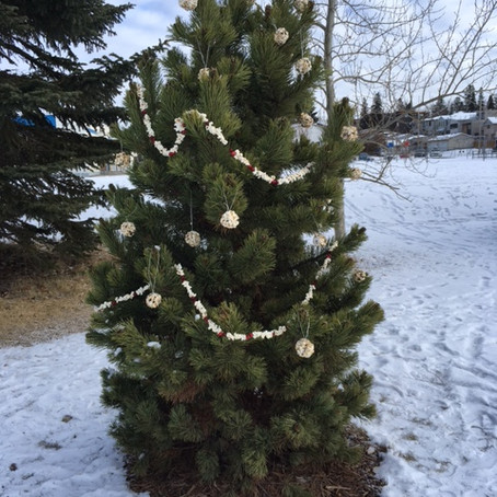 First Decorated Tree at the Richmond/Knob Hill Rink