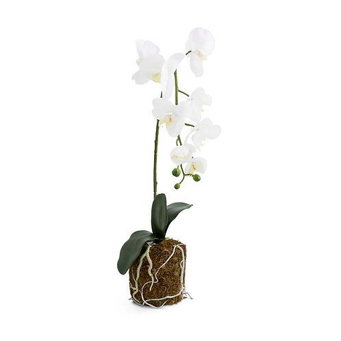 Orchid in Moss Pot