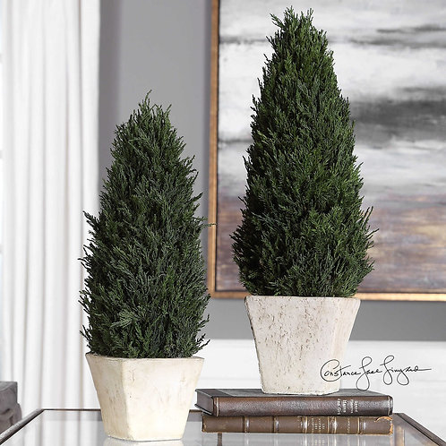 Cypress Cone Topiaries