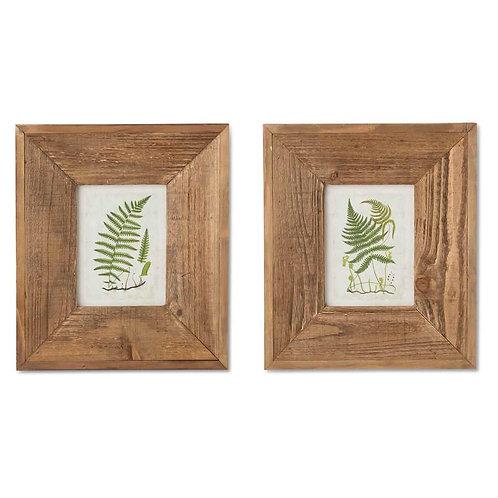 Fern Prints In Wooden Frame