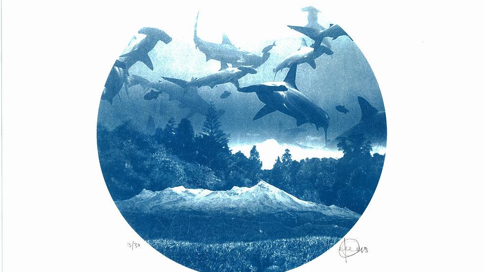 Sharks! (40x40cm)