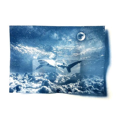 Dream Shark (30x40cm)