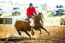 Yarrawa Park Stock Horses