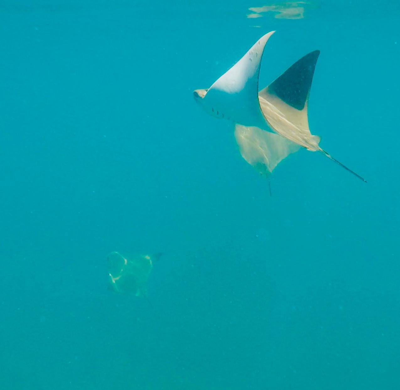 Snorkeling Concha Perla