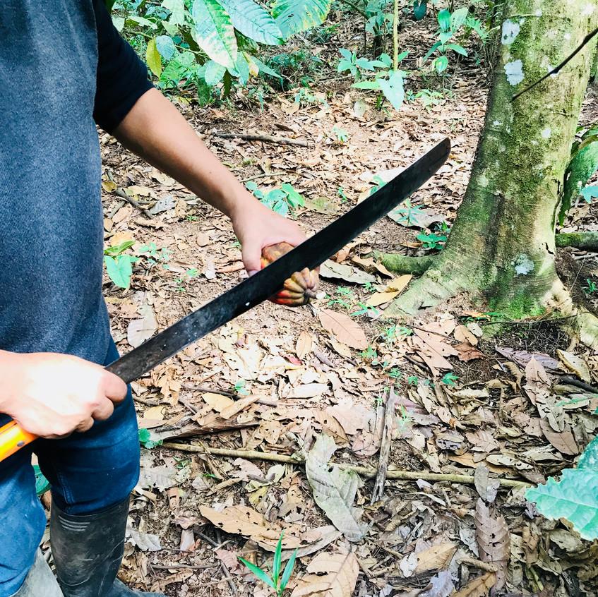 Les plantes de l'Amazonie