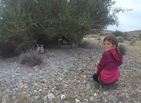 De Puerto Santa Cruz au Lago Azul – Notre meilleur spot pinguinos !