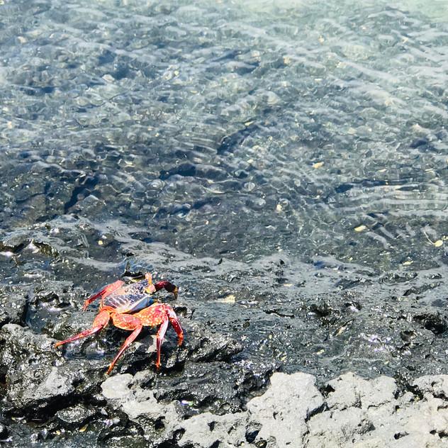 Tortuga Bay- au retour