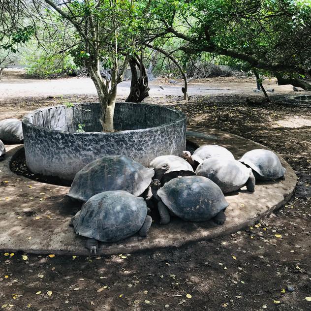 Centre tortue Arnaldo Tupiza