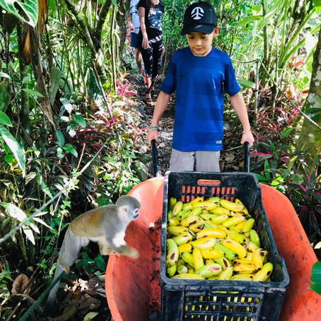 Volontariat en Famille- Rescate Los Monos