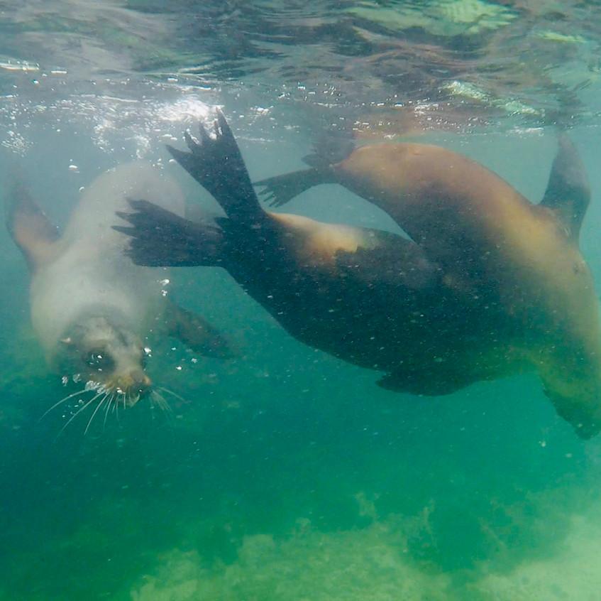 snorkeling aux Tintorejas