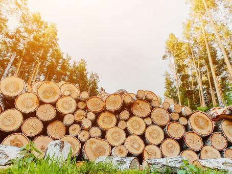 Caldaie a legna: tutto ciò che c'è da sapere