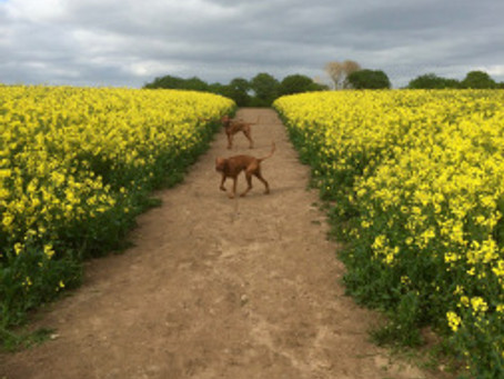 The strange behaviour of dog-owners