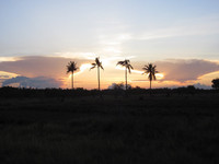 Coconuts sunset