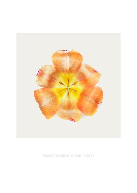FLOWER IN DECAY