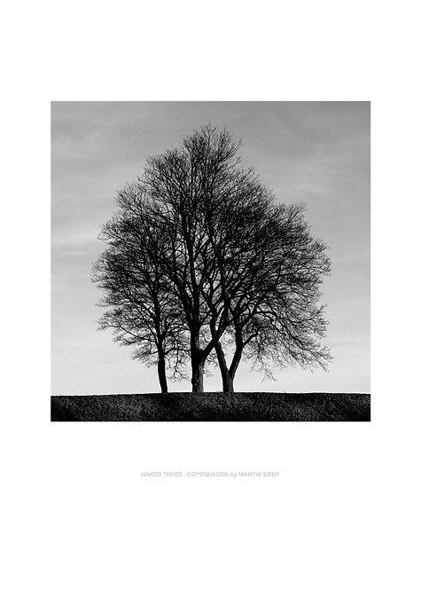 NAKED TREES · COPENHAGEN
