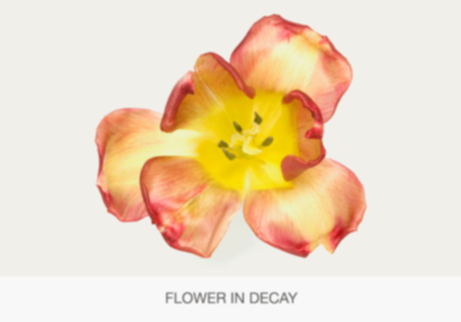 FLOWER-IN-DECAY.png