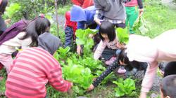 種植有機農作物