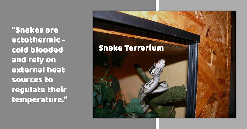 Snake Terrarium ; Habitat ; Ectothermic ; Cold Blooded ;