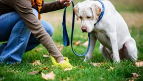 Eco Hazards in Plastics & Pet Poop