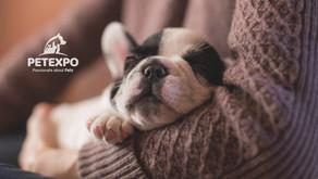 Puppy Day - Backyard Breeder or Ethical Breeder?