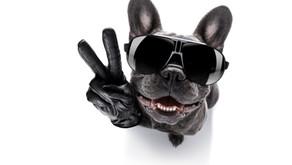 Celebrate International Dog Day