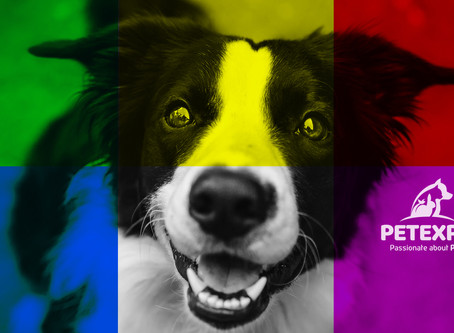 Colour Coding For Dogs
