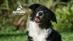 Border Collie Rescue: A Background
