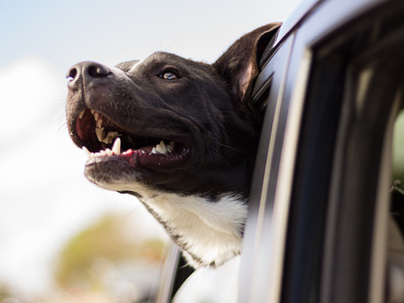 Tips for Trouble Free Travelling With Your Pet