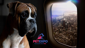 Advice For Easy Airline Travel With Your Pet