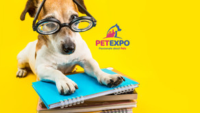 What Online Dog Training is Available?