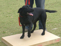 dog training 1809 061.JPG