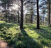 forest-sun.jpg