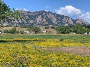 Boulder City Council Accelerates Housing Occupancy Discussion