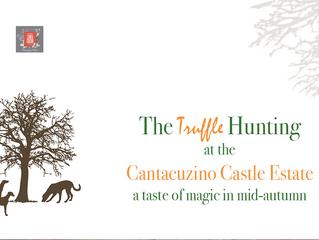 The Truffle Hunting