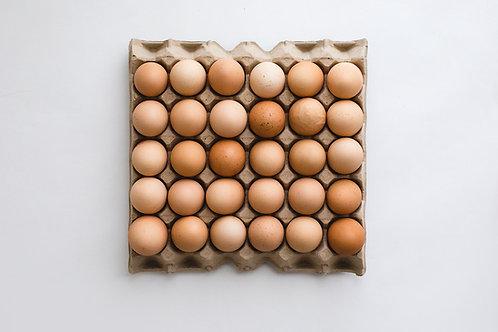 1 x 600g Tray Pastured Free Range Eggs (30 eggs)
