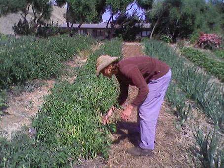 Creating permaculture