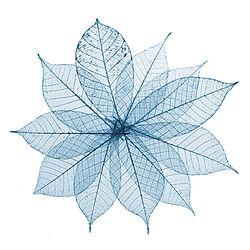 Skeleton Leaves Flower Composition on wh