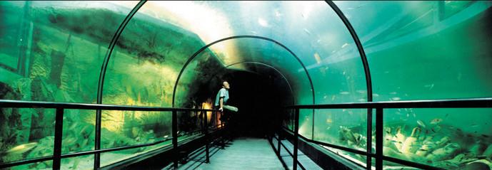 Underground Aquariunm