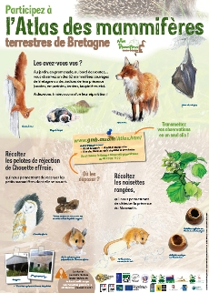 Mammifères terrestres de Bretagne